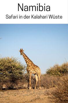 Namibia, Afrika: Safari in der Kalahari Wüste mit Zebras, Gnus & Giraffen. Fotos, Reise Inspiration und Tipps für deinen Urlaub.