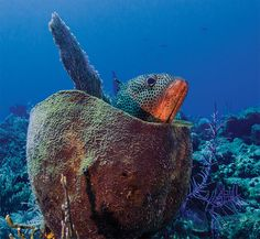 Best Coral Reef in Caribbean   ... Coast, The Last Best Coral Reefs in the Caribbean Thrive: e360 Gallery