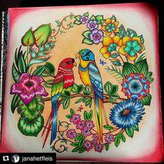 #Repost @janahetfleis with @repostapp  #magicaljungle #magicaljungleparrots…