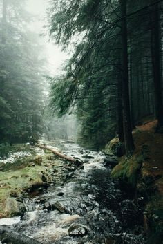scenery, nature, firsts, trees