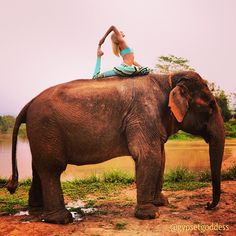 This amazing! I want to do yoga on an elephant!