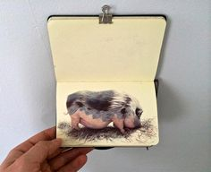 Artist Nicolas V. Sanchez fills entire sketchbooks with drawings of the world around him rendered in precise color ballpoint. Portraits of families page by page, sprawling scenes of rugged farms and livestock, and near photographic recollections of people and places from residencies in the Dominic