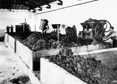 Grape harvest for Port Wine - Douro Valley (not sure) - Portugal - photo by Artur Pastor