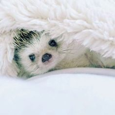 """Good Morning!"""