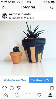 Houseplants Plant Design, Houseplants, Planter Pots, Indoor House Plants, Potted Plants