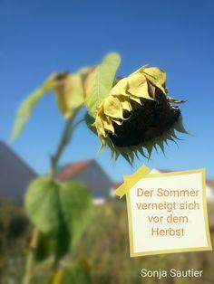 Der Sommer verneigt sich… – Leidenschaftlich schön leben!