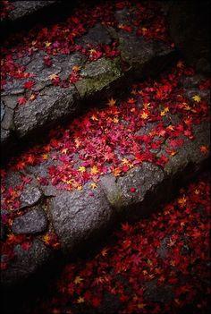 Dark Autumn, Foto Art, Wabi Sabi, Autumn Leaves, Red Leaves, Maple Leaves, Autumn Nature, Falling Leaves, Belle Photo