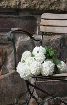 flowers for Lenore