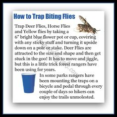 How to trap biting flies