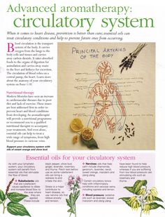 Healing Herbs, Holistic Healing, Medicinal Plants, Natural Healing, Essential Oil Uses, Young Living Essential Oils, Nourishing Traditions, Mind Body Spirit, Aromatherapy Oils