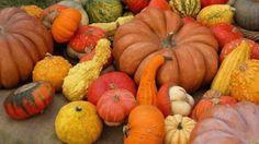 Nel borgo langarolo l'ortaggio arancione è quasi una religione. E restituisce tanti benefici per la pelle e i capelli