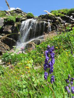 Bergsommer! Blumen, Wasser, saftige Wiesen,.. Erlebe solche Momente bei unseren geführten Wanderungen. Berg, Waterfall, Outdoor, National Forest, Hiking, Things To Do, Summer, Flowers, Outdoors