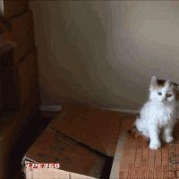 21 chiens et chats qui se sont humiliés tout seuls en faisant n'importe quoi – Animaux