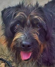 Dogs For Adoption Leander Texas