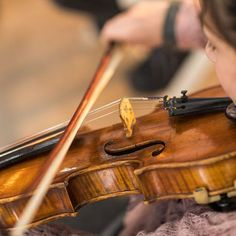 Violin String Round-Up: Advanced vs. Violin Bow, Double Bass, Teaching Music, Orchestra, Plays, Instruments, Studio, Board, Tips
