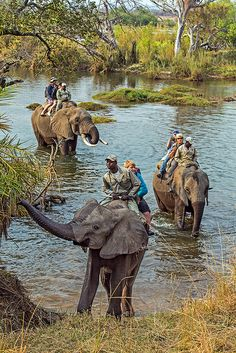 I didn't take the Elephant Safari but I remember having a formal dinner  with Steve served by tuxedo-wearing waiters at a single table set up on a Persian carpet by the river....table cloth, crystal, champagne flutes, steaming hot foods, Zambezi River near Victoria Falls, Zambia