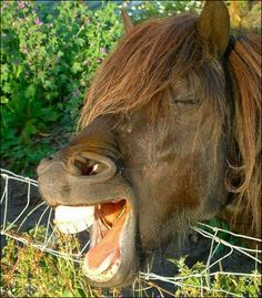 Funny Stuff #jokes, #funny, #humor, #pinsville