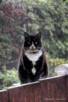 Panga the cat in the garden with that stare ... / Pets and Wildlife ღ