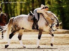 BEAUTIFUL grey horse!