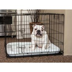 American Kennel Club Dog Crate with Bonus Pad - Medium *** Click on the image for additional details. (This is an affiliate link and I receive a commission for the sales) #DogCare