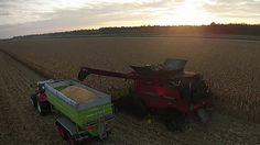 CASE IH Axial Flow 8230. Maïsdorsen met capaciteit!  corn harvest Trekke...