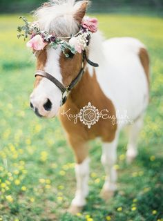 My ring barer and flower girl are going to pulled down in a cart with a mini pony just like this one! Totally gonna do the halo too!