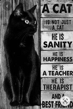 Crazy Cat Lady, Crazy Cats, I Love Cats, Cool Cats, Regard Animal, Black Cat Art, Black Cats, Cat Posters, Cat People