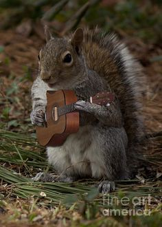 The Acorn's guitarist By Sandra Clark  a little squirrel from the band of squirrels called the Acorns is playing the guitar.