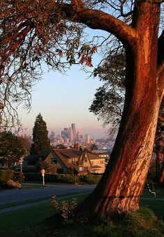 View of Seattle from the beautiful Magnolia Blvd