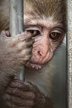 This makes me sad, no wild animal should be caged up like this (look at those eyes :( OCEANS OF TEARS :(