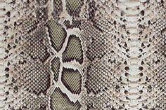 24680887-Snake-Skin-Stock-Photo-python.jpg (1300×866)