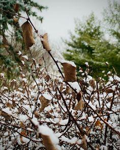 #cinqmars #winter Bird, Winter, Photography, Animals, Winter Time, Photograph, Animales, Animaux, Birds