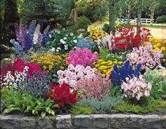 41 idees de massif de vivaces fleuri