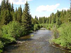 Logan Creek below Star Meadows Montana