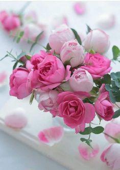 Flowers And Feelings Amazing Flowers, Beautiful Roses, My Flower, Beautiful Flowers, Pink Roses, Pink Flowers, Good Morning Flowers, Love Rose, Flower Wallpaper
