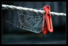 A web on a wire.