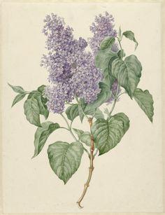 Tak met paarse seringen, 1786-1838, Maria Geertruyd Barbiers-Snabilie
