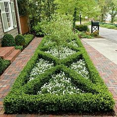 Co Co's Collection : Formal garden # structure # roses # boxwood. Parterre border filled with fragrant white alyssum