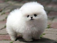 cutest doggg!!!!!