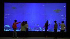 interactive aquarium by Cinimod Studio