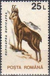 Znaczek: Chamois (Rupicapra rupicapra) (Rumunia) (Zwierzęta) Mi:RO 4904X,Sn:RO 3838,Yt:RO 4097