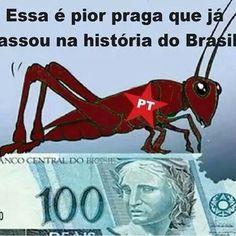 Os ladros do brasil