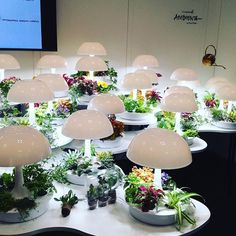 Your thumb just got greener: ambienta lamp to help grow plants by @sagegreenlife #nynow