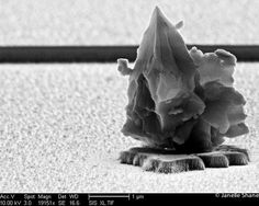 A particle of dust, viewed at around 19,000x in an electron microscope.