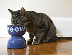 Cute idea for Pet food bowl. I bet my cat would be even more of a Jaguar Queen with this one.