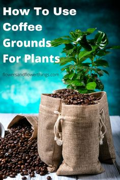 Learn how to reuse old and leftover coffee grounds for plants in the garden and in pots. Get all the benefits without destroying your plant. #coffee #plants Coffee Grounds For Plants, Garden Planters, Houseplants, Reuse, Planting Flowers, Outdoor Living, Pots, Landscaping, Green