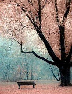 Prachtige boom met een bankje. Hele mooie, zachte kleuren. Het is magisch en rustgevend.