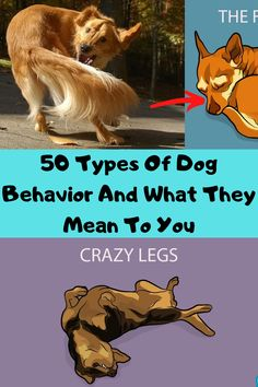 Have you ever been around your dog and wondered what they are thinking or feeling? Surely you have caught your canine doing something bizarre that has made you question yourself. Here are 50 types of dog behavior explained in human terms for your benefit.