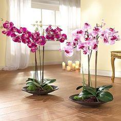 большие орхидеи