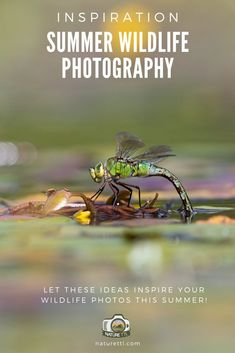 If you need inspiration and ideas for your summertime wildlife and nature photography, then this article is for you. Beavers, dragonflies, and moor! Wildlife Photography Tips, Photography Basics, Photography Tips For Beginners, Underwater Photography, Outdoor Photography, Photography Tutorials, Animal Photography, Photography Ideas, Nature Photography